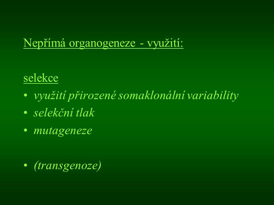 Nepřímá organogeneze - využití: selekce využití přirozené somaklonální variability selekční tlak mutageneze (transgenoze)