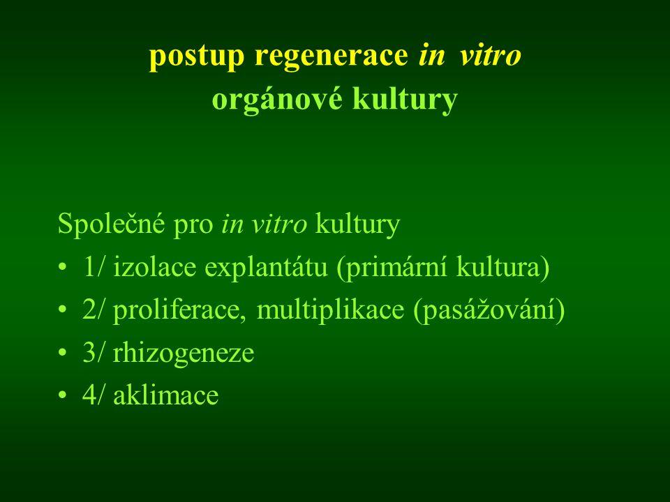 postup regenerace in vitro orgánové kultury Společné pro in vitro kultury 1/ izolace explantátu (primární kultura) 2/ proliferace, multiplikace (pasáž