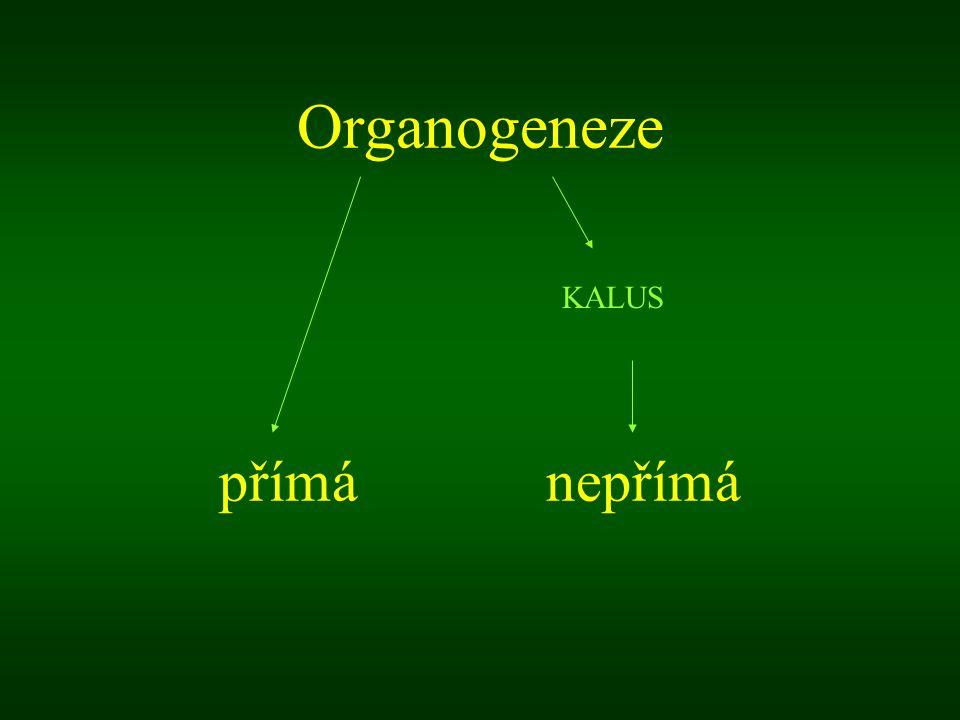 Kalus - dediferencované pletivo ránový obrana organismu neorganogenní (neembryogenní) produkce metabolitů, studium organogenní (prýty  kořeny) selekce, mikropropagace embryogenní (somatické embryo SE  rostlinka) selekce, mikropropagace (  nebezpečí vzniku chimér)
