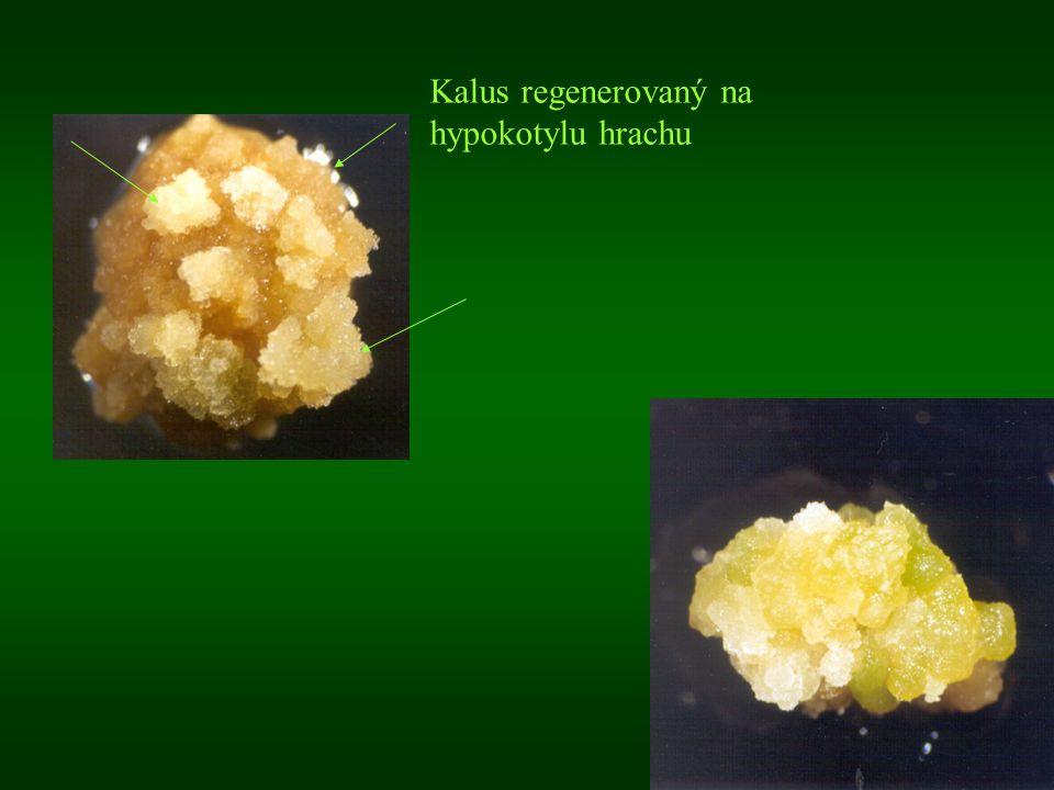 Přímá organogeneze - (nižší riziko mutací) : rychlé namnožení nových odrůd (podstatné zvýšení množitelského koeficientu, urychlení šlechtitelského procesu) (brambory klasicky 1: 5 -10, mikropropagace 1: 500000) vzdálená křížení šlechtitelsky cenné mutace množení těžko množitelných kultur (rododendrony apod.), cenných jedinců, vzácných druhů