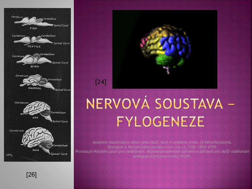  Přední část trubice se vychlípí ve 3 váčky, z nichž pak vznikají 3 oddíly mozku: přední (čich), střední (zrak) a zadní (poloha a rovnováha).