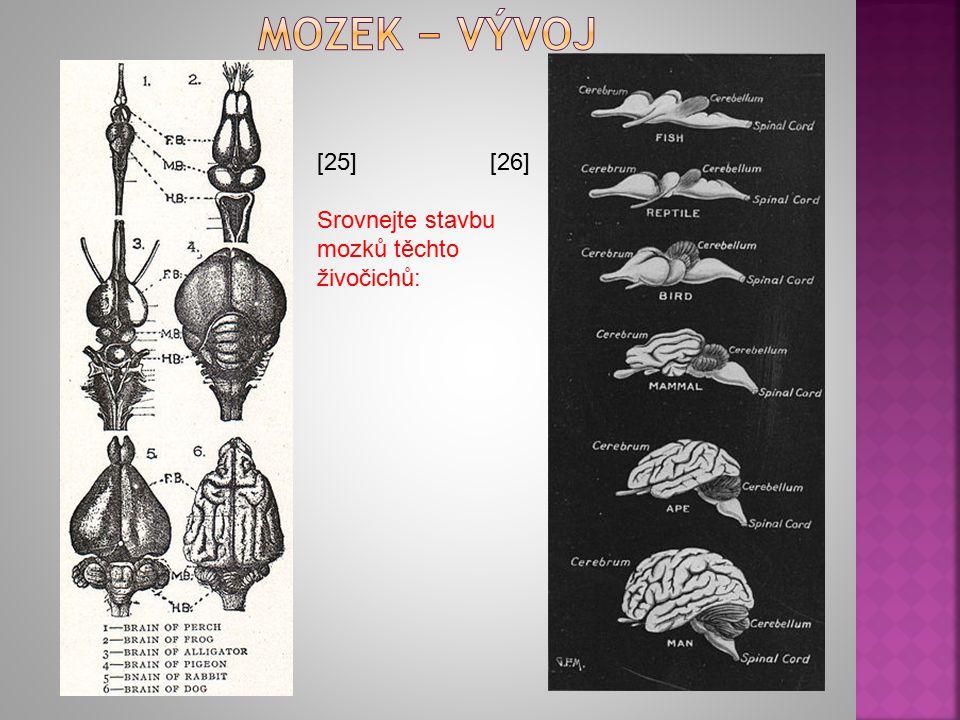[25] [26] Srovnejte stavbu mozků těchto živočichů: