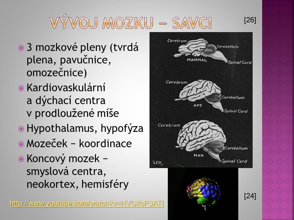  3 mozkové pleny (tvrdá plena, pavučnice, omozečnice)  Kardiovaskulární a dýchací centra v prodloužené míše  Hypothalamus, hypofýza  Mozeček − koo