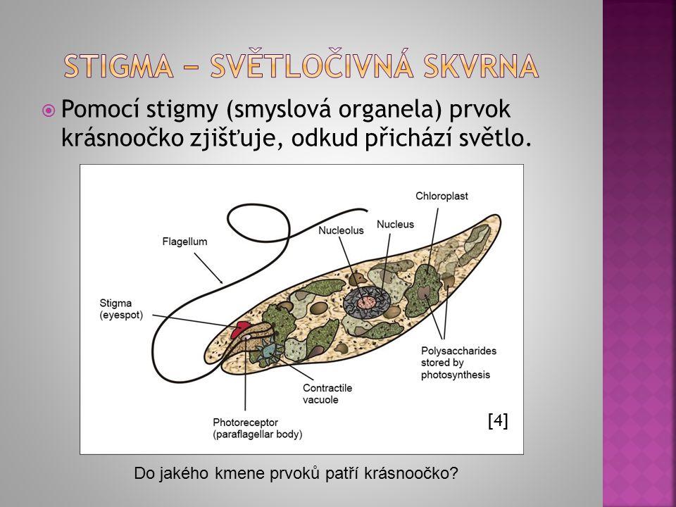  Pomocí stigmy (smyslová organela) prvok krásnoočko zjišťuje, odkud přichází světlo. [4] Do jakého kmene prvoků patří krásnoočko?