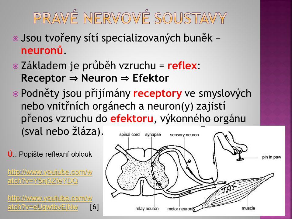  U žahavců a žebernatek  Hustá síť multipolárních neuronů, vzruchy vedeny všemi směry  Nezmar − NS umístěná při ektodermu  Medúzy − určitá koncentrace neuronů na okrajích zvonu, NS tvoří dva prstence  Rychlost šíření vzruchu difúzní soustavou je poměrně malá, 4−15 cm za sekundu.