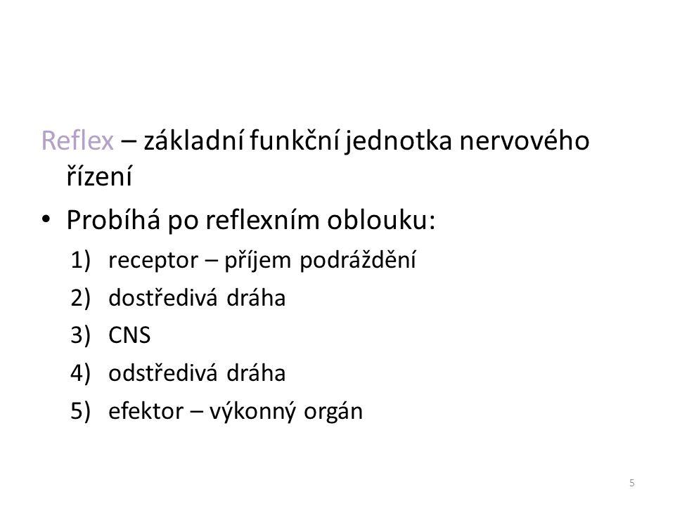 Reflex – základní funkční jednotka nervového řízení Probíhá po reflexním oblouku: 1)receptor – příjem podráždění 2)dostředivá dráha 3)CNS 4)odstředivá dráha 5)efektor – výkonný orgán 5