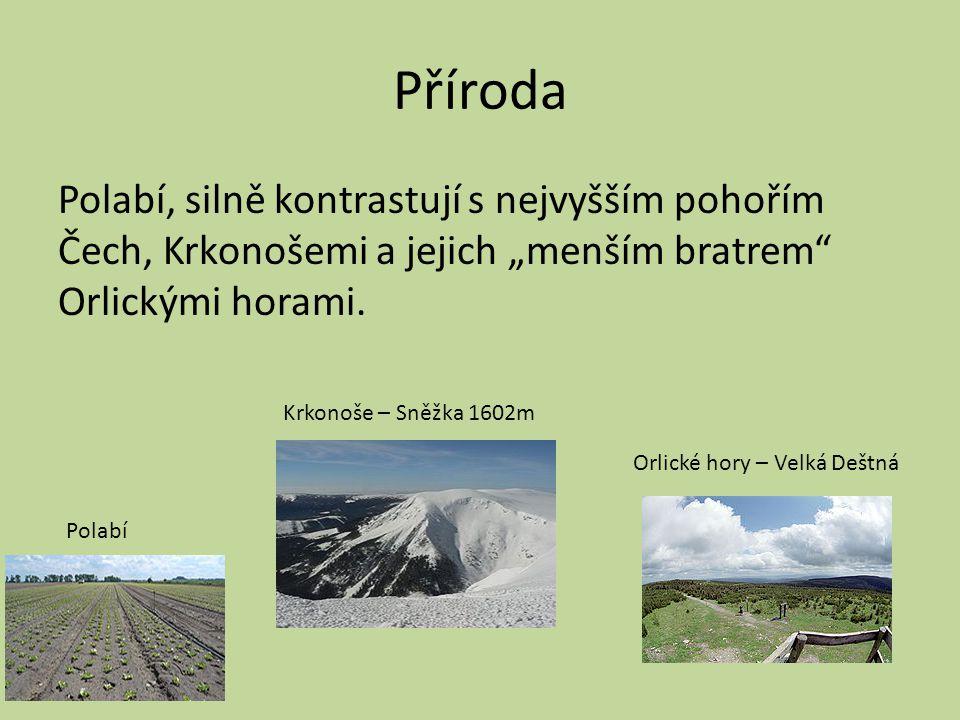 """Příroda Polabí, silně kontrastují s nejvyšším pohořím Čech, Krkonošemi a jejich """"menším bratrem Orlickými horami."""