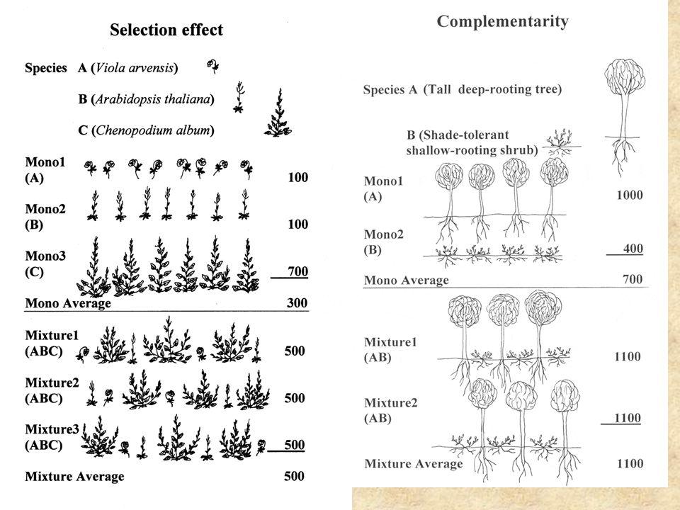 Diversity and stability Portfolio effect: Se součtem nezávislých veličin se snižuje jejich variační koeficient Problém - aby fungovalo, musí být veličiny nezávislé Tilmanova predikce: Se zvětšujícím se počtem druhů budou charakteristiky společenstva (jeho celková produktivita fluktuovat méně, ale populační velikosti budou variabilnější)