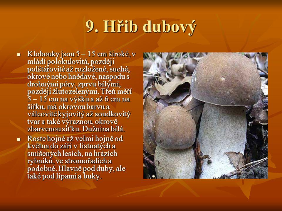 9. Hřib dubový Klobouky jsou 5 – 15 cm široké, v mládí polokulovitá, později polštářovité až rozložené, suché, okrové nebo hnědavé, naspodu s drobnými
