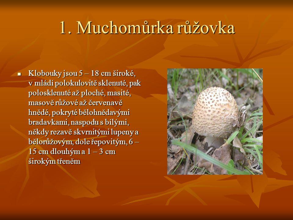 1. Muchomůrka růžovka Klobouky jsou 5 – 18 cm široké, v mládí polokulovitě sklenuté, pak polosklenuté až ploché, masité, masově růžové až červenavě hn