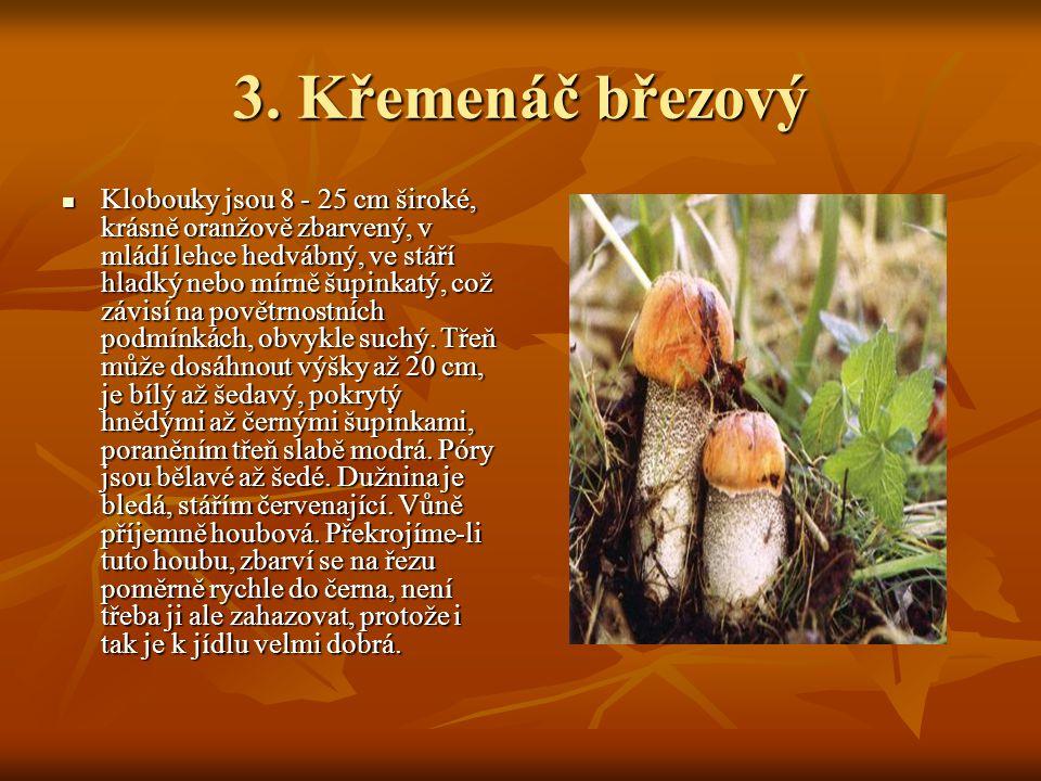 3. Křemenáč březový Klobouky jsou 8 - 25 cm široké, krásně oranžově zbarvený, v mládí lehce hedvábný, ve stáří hladký nebo mírně šupinkatý, což závisí