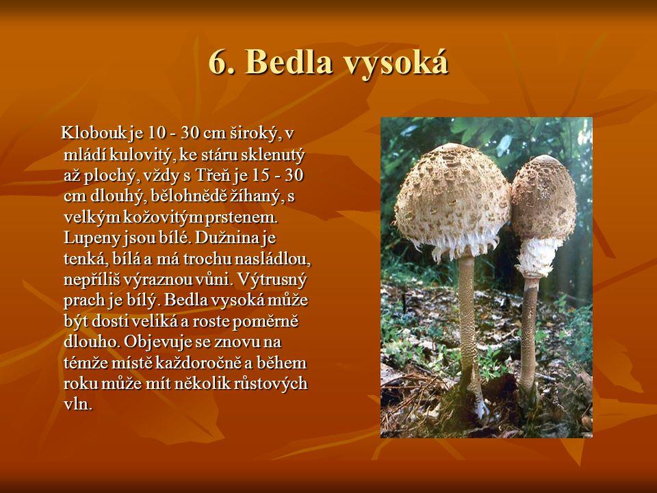 6. Bedla vysoká 6. Bedla vysoká Klobouk je 10 - 30 cm široký, v mládí kulovitý, ke stáru sklenutý až plochý, vždy s Třeň je 15 - 30 cm dlouhý, bělohně