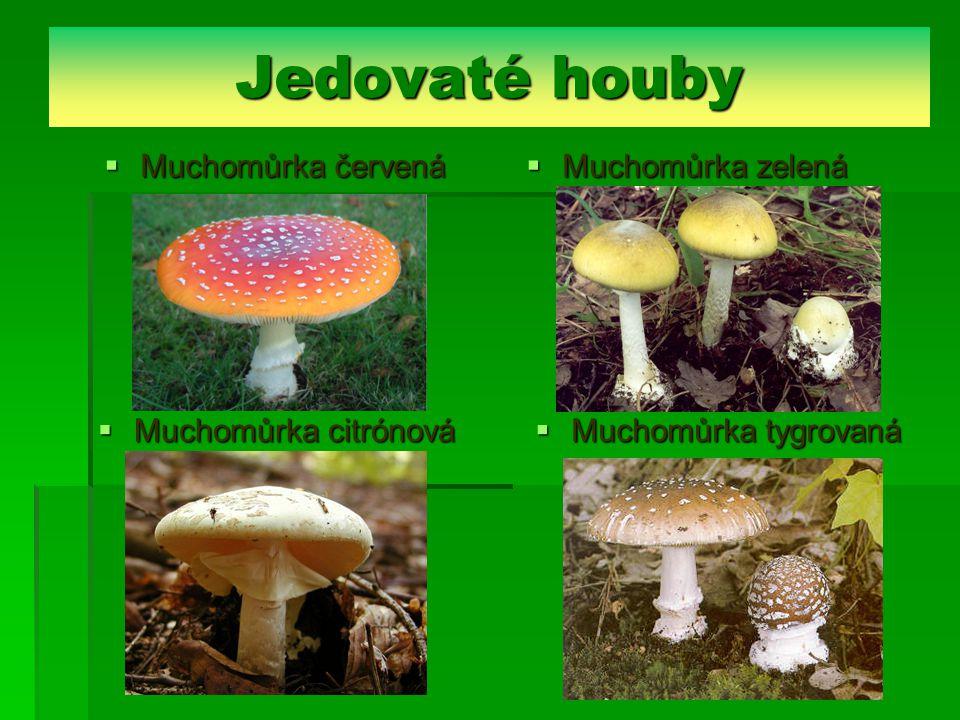 Jedovaté houby  Muchomůrka červená  Muchomůrka zelená  Muchomůrka citrónová  Muchomůrka tygrovaná