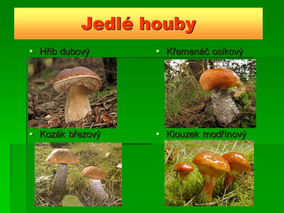 Jedlé houby  Hřib dubový  Křemenáč osikový  Kozák březový  Klouzek modřínový