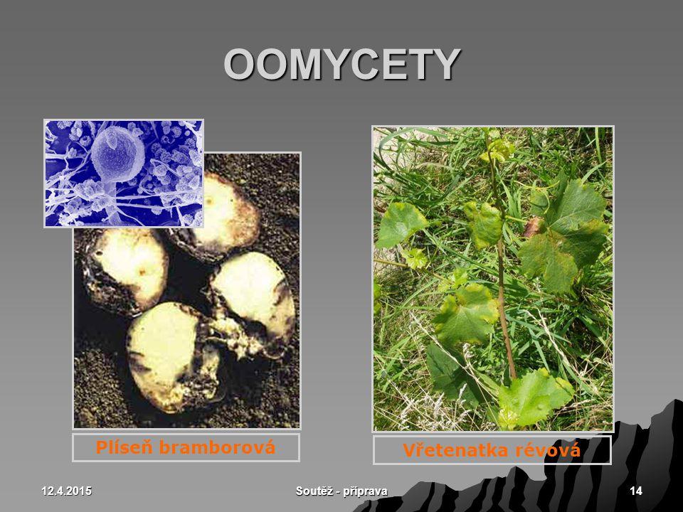 12.4.2015 Soutěž - příprava 14 OOMYCETY Plíseň bramborová Vřetenatka révová