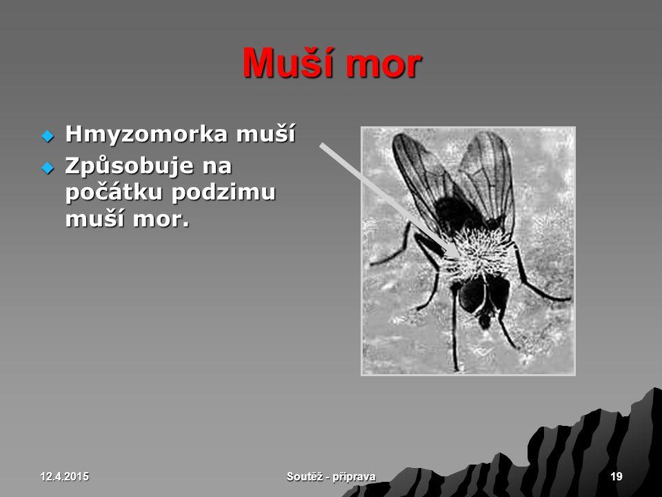 12.4.2015 Soutěž - příprava 19 Muší mor  Hmyzomorka muší  Způsobuje na počátku podzimu muší mor.