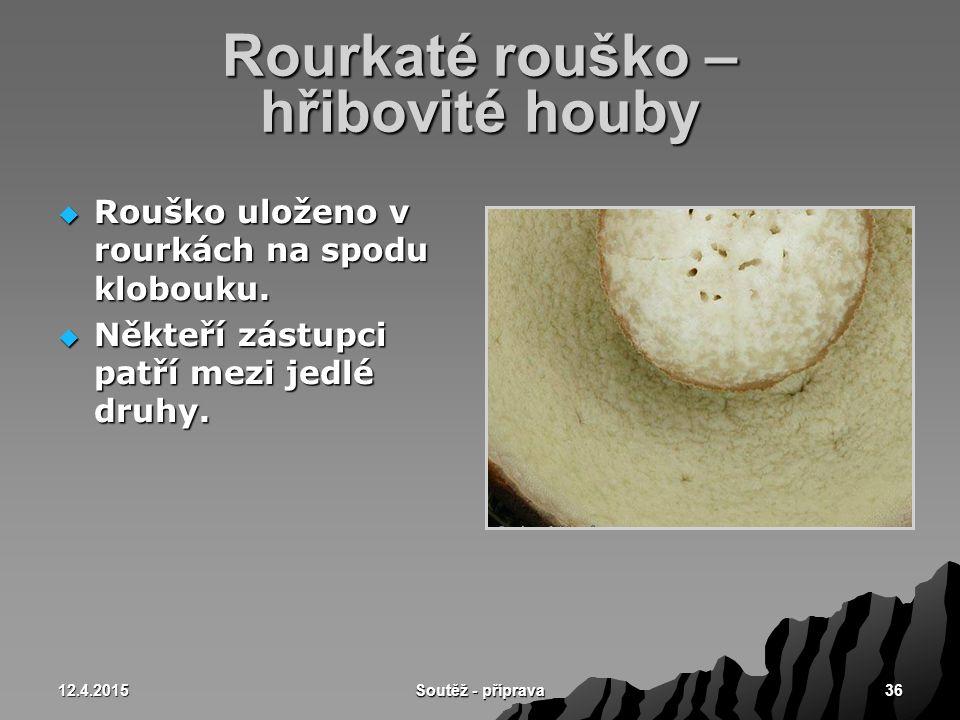 12.4.2015 Soutěž - příprava 36 Rourkaté rouško – hřibovité houby  Rouško uloženo v rourkách na spodu klobouku.  Někteří zástupci patří mezi jedlé dr
