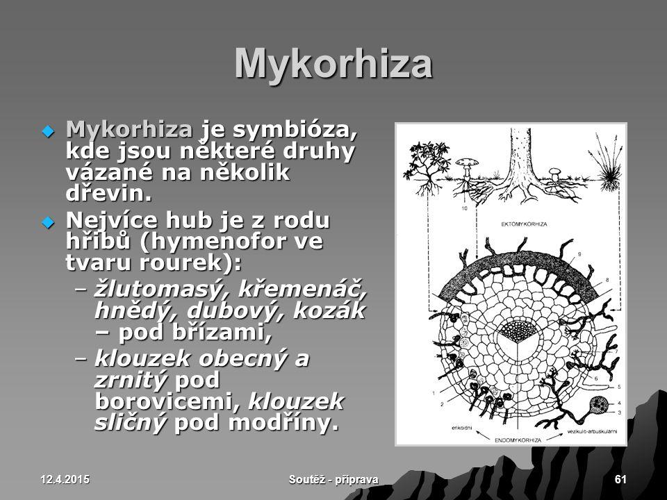 12.4.2015 Soutěž - příprava 61 Mykorhiza  Mykorhiza je symbióza, kde jsou některé druhy vázané na několik dřevin.  Nejvíce hub je z rodu hřibů (hyme