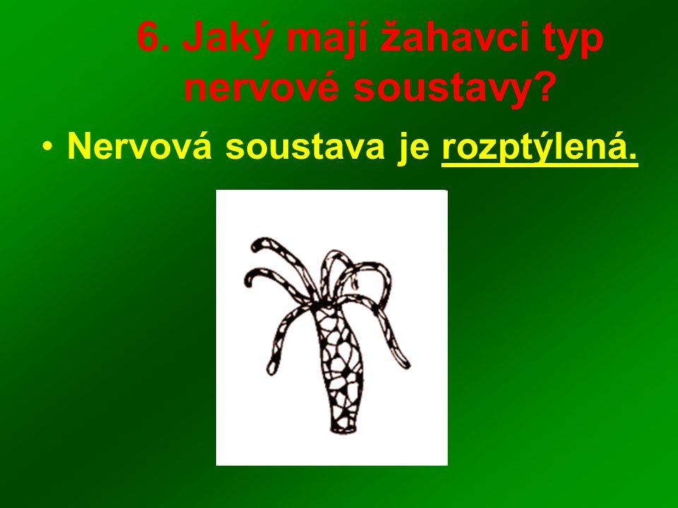 6. Jaký mají žahavci typ nervové soustavy? Nervová soustava je rozptýlená.