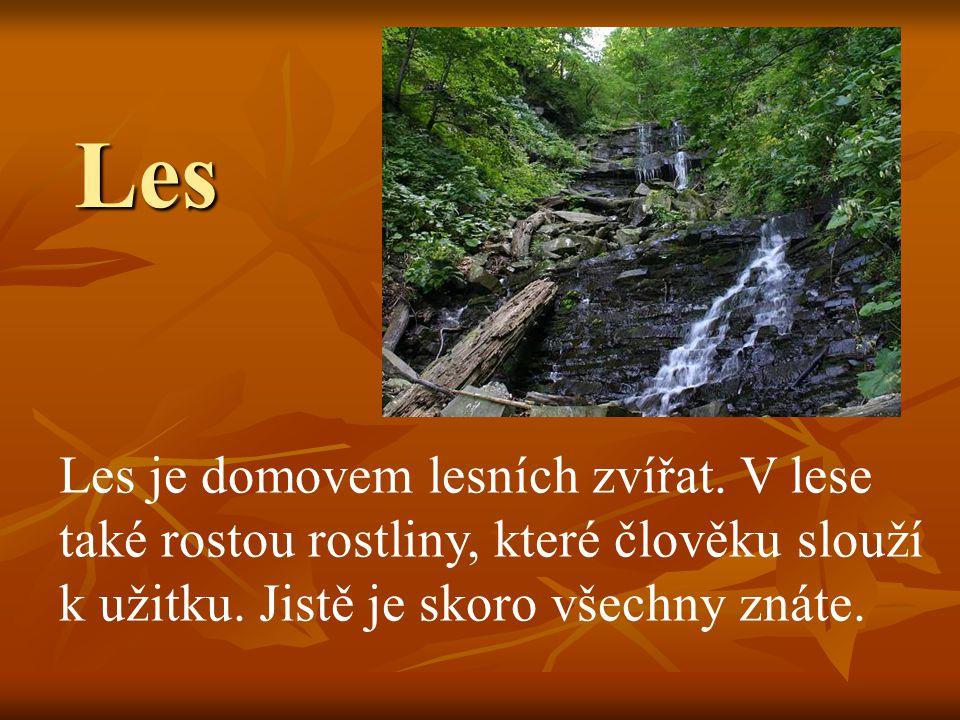Les Les je domovem lesních zvířat.V lese také rostou rostliny, které člověku slouží k užitku.