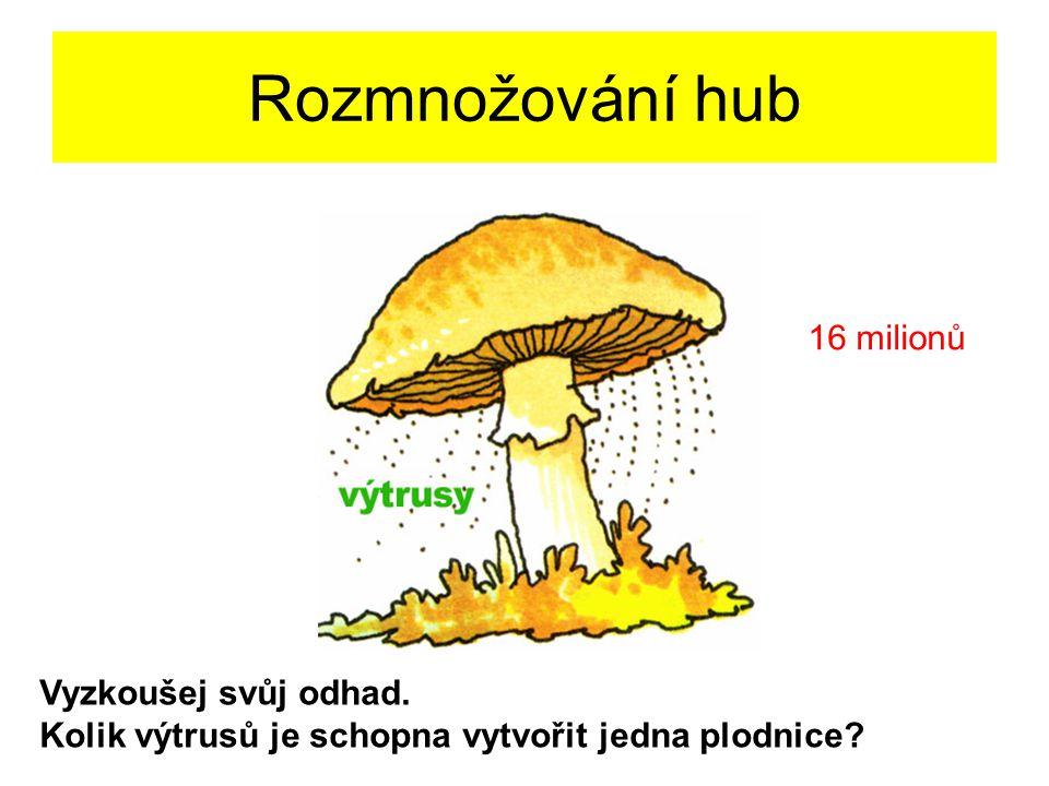 Rozmnožování hub Vyzkoušej svůj odhad. Kolik výtrusů je schopna vytvořit jedna plodnice? 16 milionů
