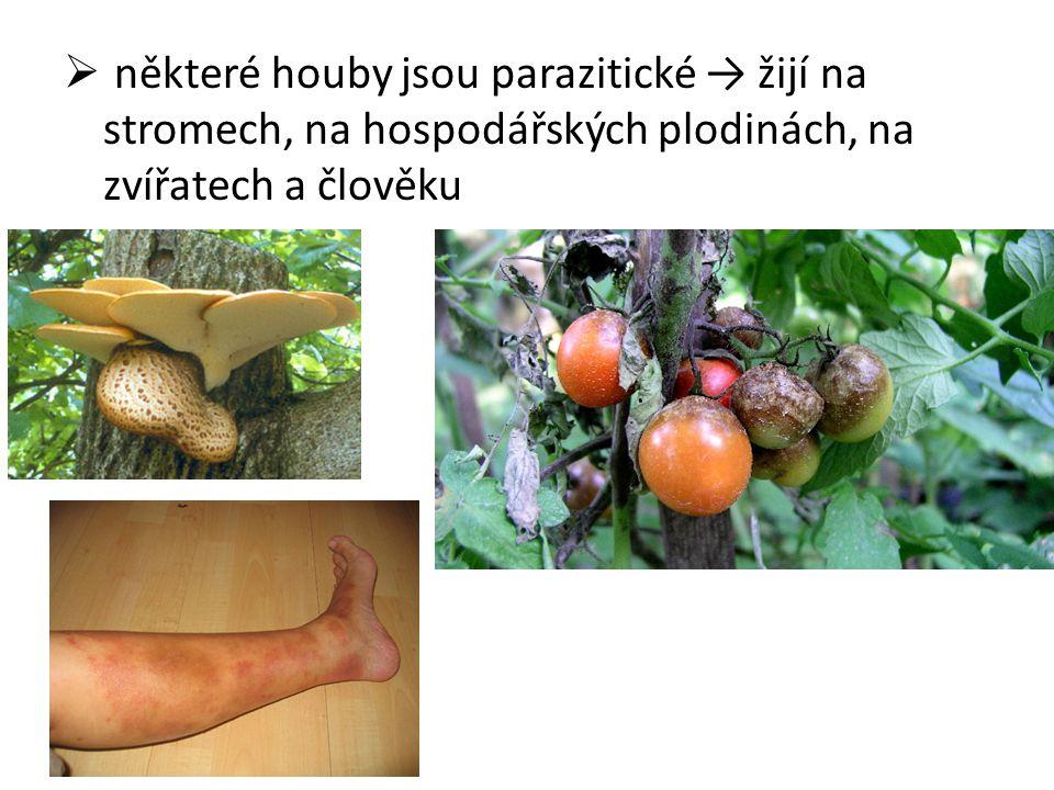  některé houby jsou parazitické → žijí na stromech, na hospodářských plodinách, na zvířatech a člověku