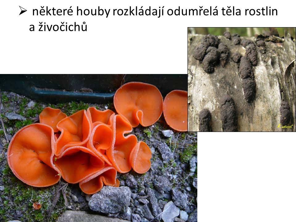  některé houby rozkládají odumřelá těla rostlin a živočichů