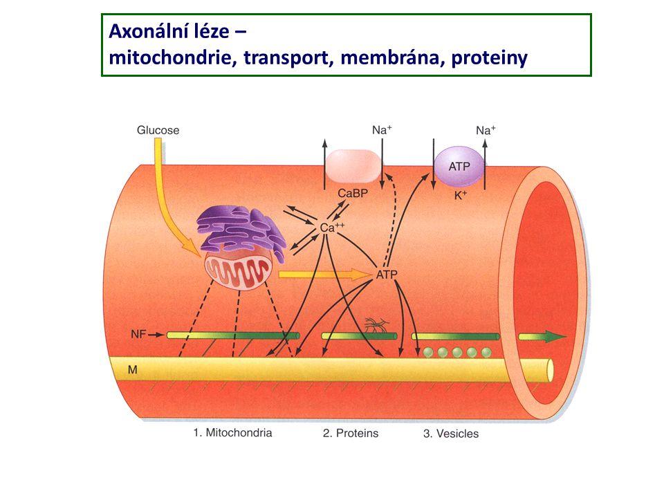 Axonální léze – mitochondrie, transport, membrána, proteiny