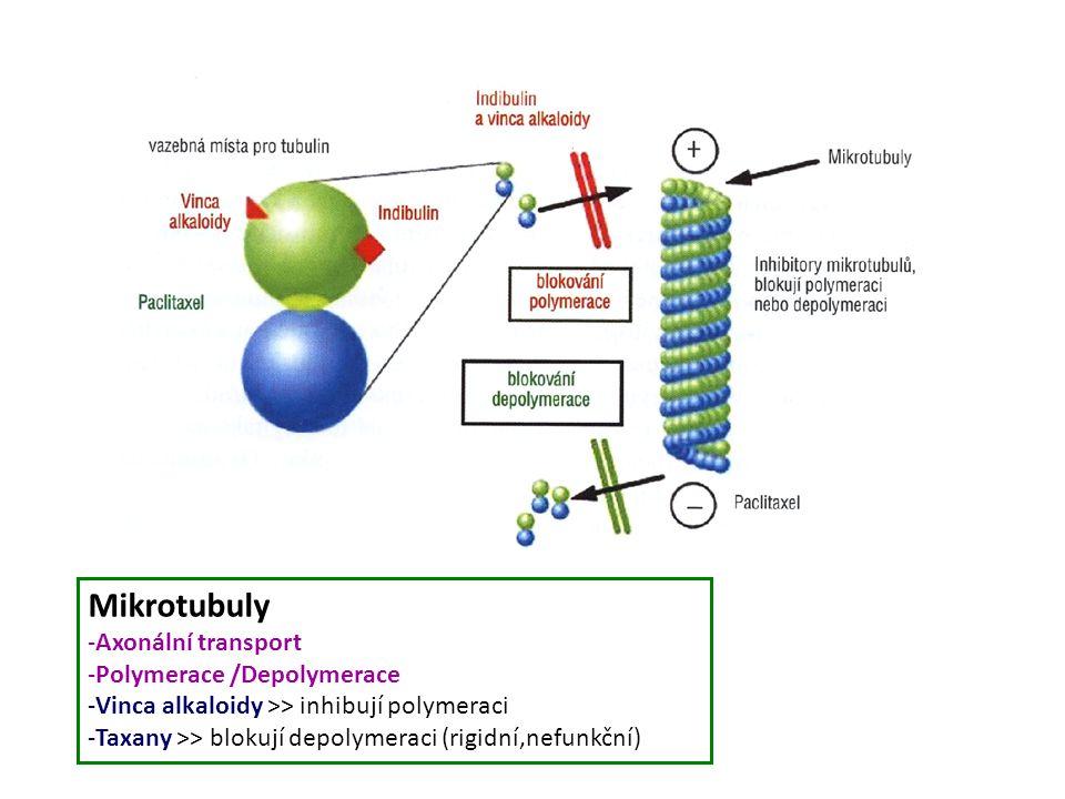 Mikrotubuly -Axonální transport -Polymerace /Depolymerace -Vinca alkaloidy >> inhibují polymeraci -Taxany >> blokují depolymeraci (rigidní,nefunkční)