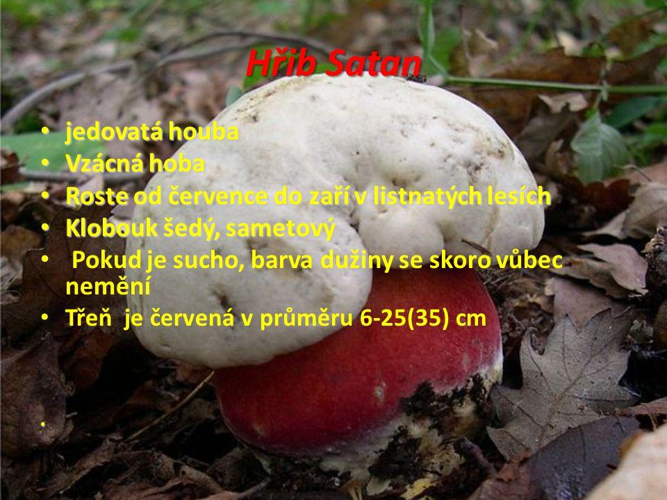 Hřib Satan jedovatá houba jedovatá houba Vzácná hoba Vzácná hoba Roste od července do zaří v listnatých lesích Roste od července do zaří v listnatých