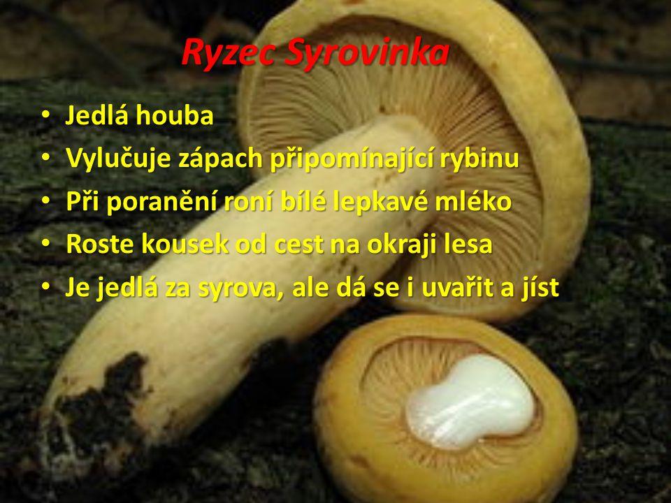 Ryzec Syrovinka Jedlá houba Jedlá houba Vylučuje zápach připomínající rybinu Vylučuje zápach připomínající rybinu Při poranění roní bílé lepkavé mléko
