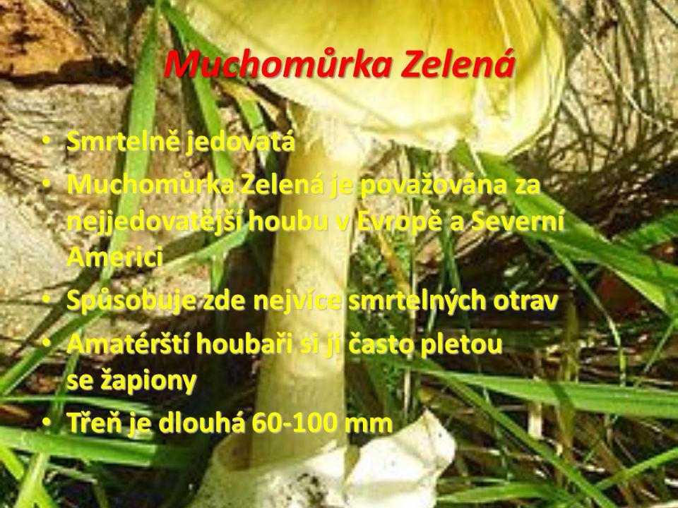 Muchomůrka Zelená Smrtelně jedovatá Smrtelně jedovatá Muchomůrka Zelená je považována za nejjedovatější houbu v Evropě a Severní Americi Muchomůrka Ze