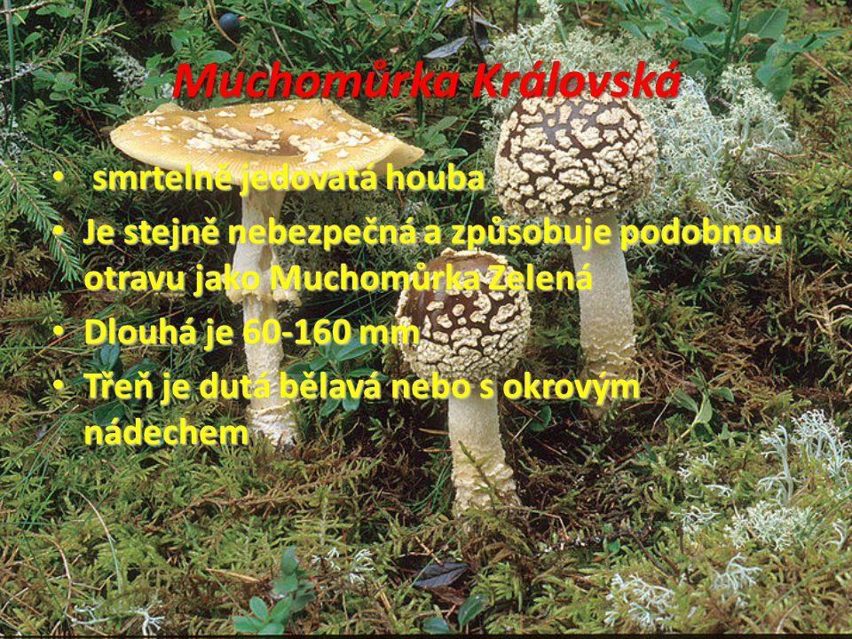 Muchomůrka Královská smrtelně jedovatá houba smrtelně jedovatá houba Je stejně nebezpečná a způsobuje podobnou otravu jako Muchomůrka Zelená Je stejně