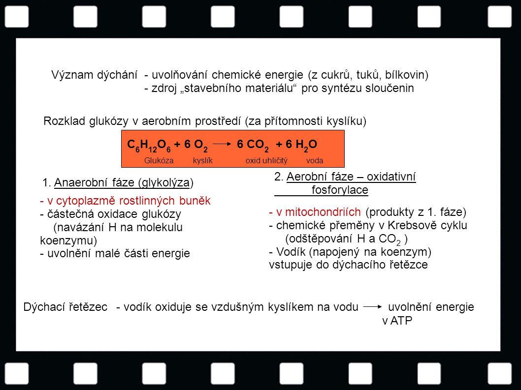 © Letohradské soukromé gymnázium o.p.s. C 6 H 12 O 6 + 6 O 2 6 CO 2 + 6 H 2 O Glukóza kyslík oxid uhličitý voda Význam dýchání- uvolňování chemické en