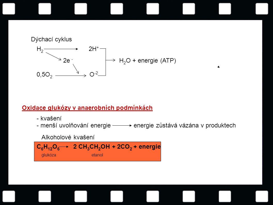 © Letohradské soukromé gymnázium o.p.s. Oxidace glukózy v anaerobních podmínkách Dýchací cyklus H 2 2H + 2e - H 2 O + energie (ATP) 0,5O 2 O -2 - kvaš