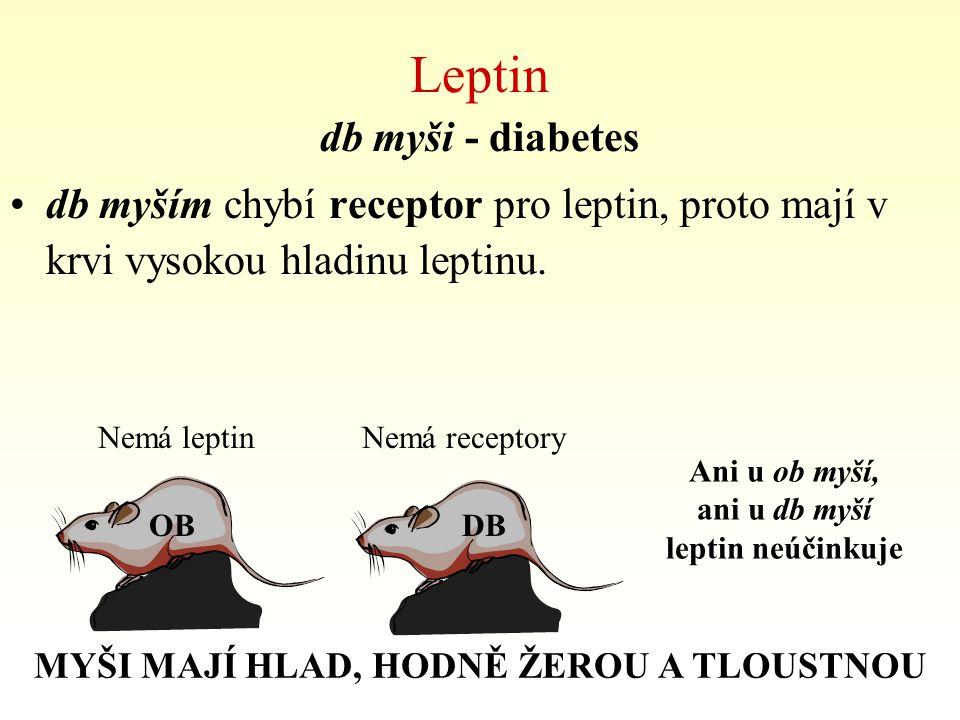Leptin db myši - diabetes db myším chybí receptor pro leptin, proto mají v krvi vysokou hladinu leptinu. OBDB Nemá leptinNemá receptory Ani u ob myší,