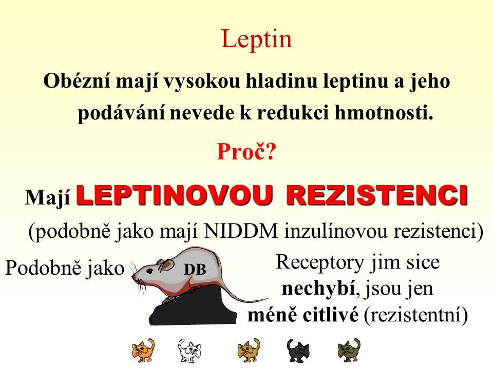 Leptin Obézní mají vysokou hladinu leptinu a jeho podávání nevede k redukci hmotnosti. Proč? LEPTINOVOU REZISTENCI Mají LEPTINOVOU REZISTENCI (podobně