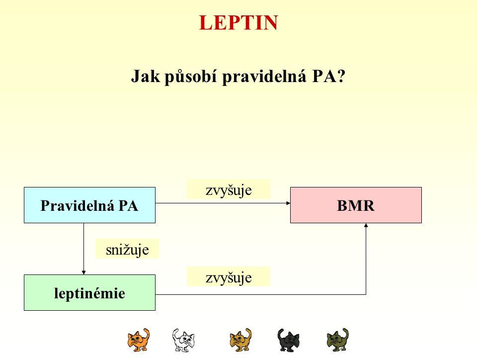 LEPTIN Jak působí pravidelná PA? hypokinezeBMR leptinémie snižuje zvyšuje snižuje Pravidelná PA zvyšuje snižuje zvyšuje