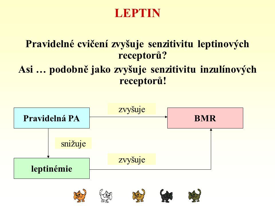 LEPTIN Pravidelné cvičení zvyšuje senzitivitu leptinových receptorů? Asi … podobně jako zvyšuje senzitivitu inzulínových receptorů! hypokinezeBMR lept