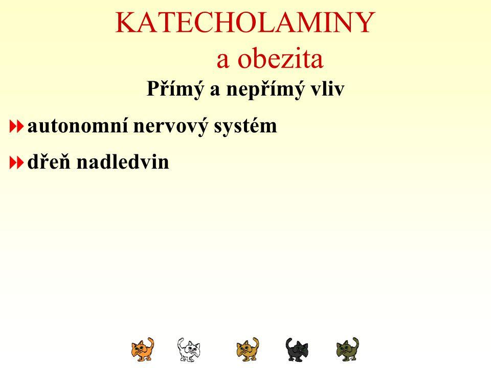 KATECHOLAMINY a obezita Přímý a nepřímý vliv  autonomní nervový systém  dřeň nadledvin