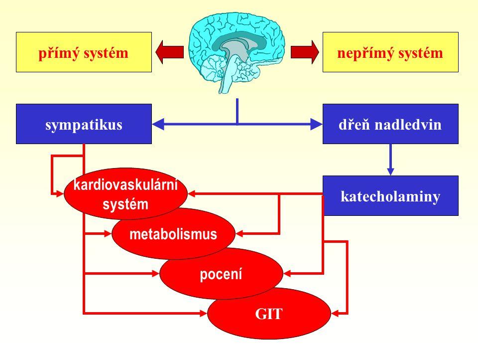 přímý systém sympatikus GIT pocení metabolismus nepřímý systém dřeň nadledvin katecholaminy kardiovaskulární systém