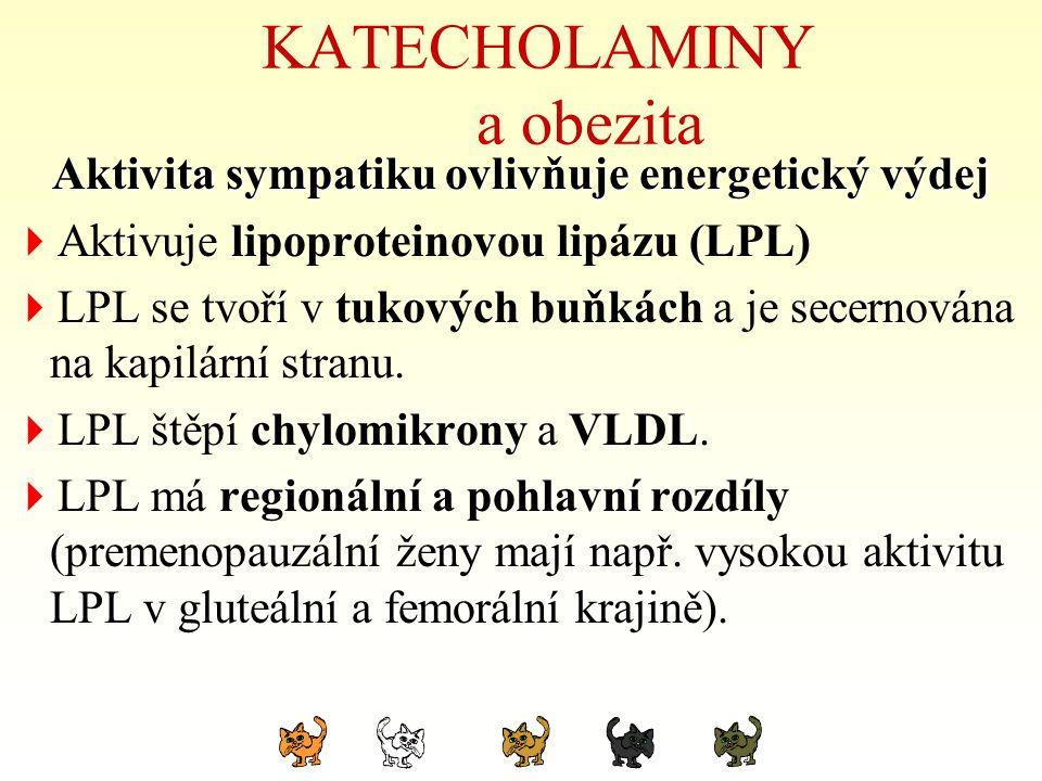 KATECHOLAMINY a obezita Aktivita sympatiku ovlivňuje energetický výdej  Aktivuje lipoproteinovou lipázu (LPL)  LPL se tvoří v tukových buňkách a je