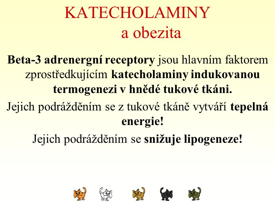 KATECHOLAMINY a obezita Beta-3 adrenergní receptory jsou hlavním faktorem zprostředkujícím katecholaminy indukovanou termogenezi v hnědé tukové tkáni.