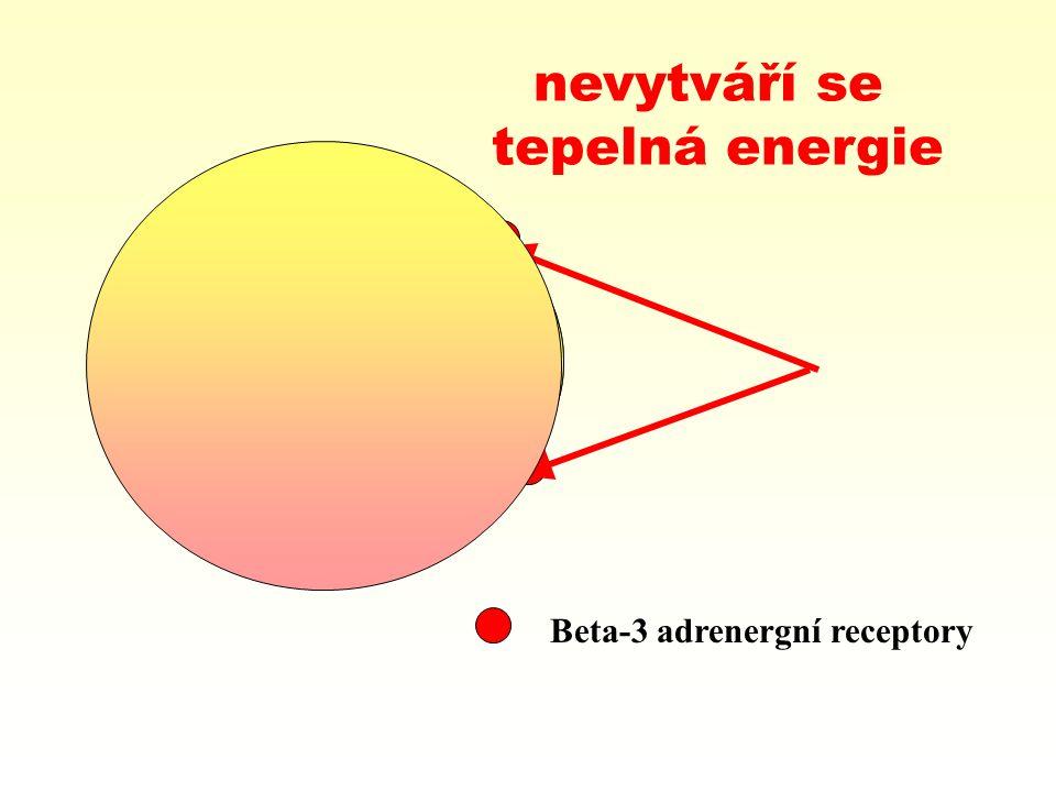 nevytváří se tepelná energie Beta-3 adrenergní receptory