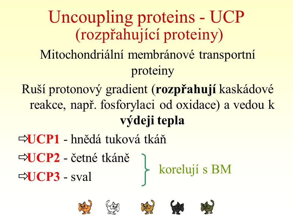Uncoupling proteins - UCP (rozpřahující proteiny) Mitochondriální membránové transportní proteiny Ruší protonový gradient (rozpřahují kaskádové reakce
