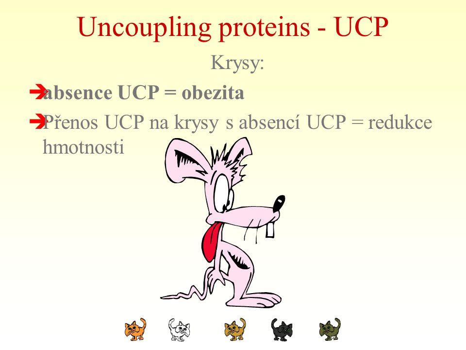 Uncoupling proteins - UCP Krysy:  absence UCP = obezita  Přenos UCP na krysy s absencí UCP = redukce hmotnosti