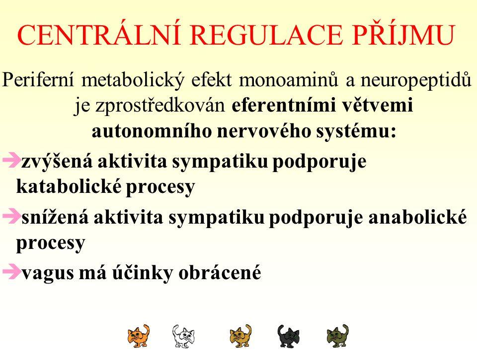 CENTRÁLNÍ REGULACE PŘÍJMU Periferní metabolický efekt monoaminů a neuropeptidů je zprostředkován eferentními větvemi autonomního nervového systému: 
