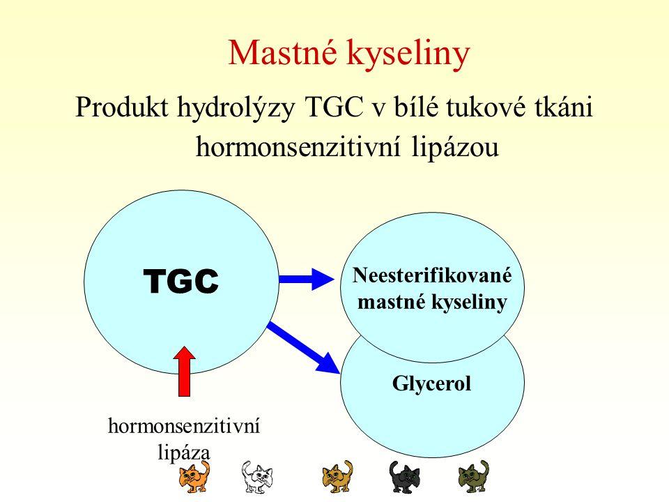 Mastné kyseliny Produkt hydrolýzy TGC v bílé tukové tkáni hormonsenzitivní lipázou TGC hormonsenzitivní lipáza Glycerol Neesterifikované mastné kyseli