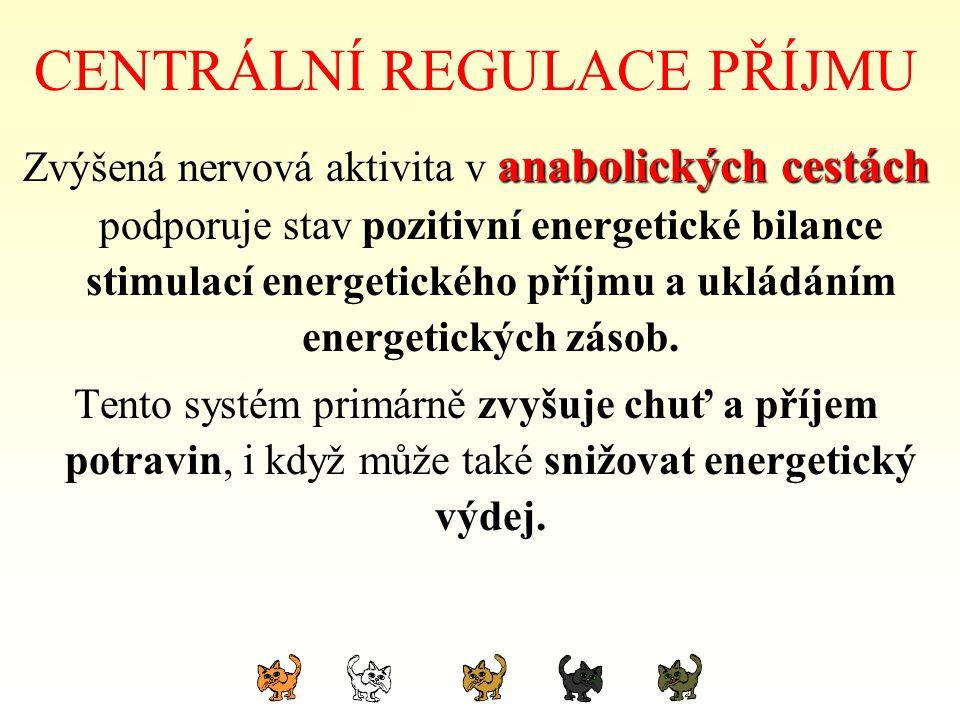 CENTRÁLNÍ REGULACE PŘÍJMU anabolických cestách Zvýšená nervová aktivita v anabolických cestách podporuje stav pozitivní energetické bilance stimulací