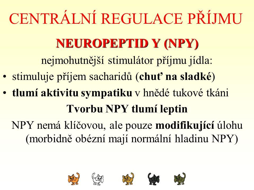 CENTRÁLNÍ REGULACE PŘÍJMU NEUROPEPTID Y (NPY) nejmohutnější stimulátor příjmu jídla: stimuluje příjem sacharidů (chuť na sladké) tlumí aktivitu sympat